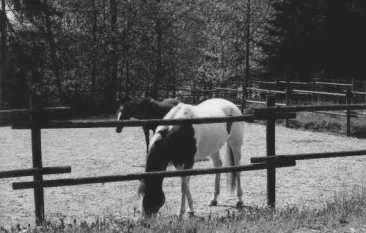 Horses-2, Ranch-1, 35mm Ilford 400 film, 2002